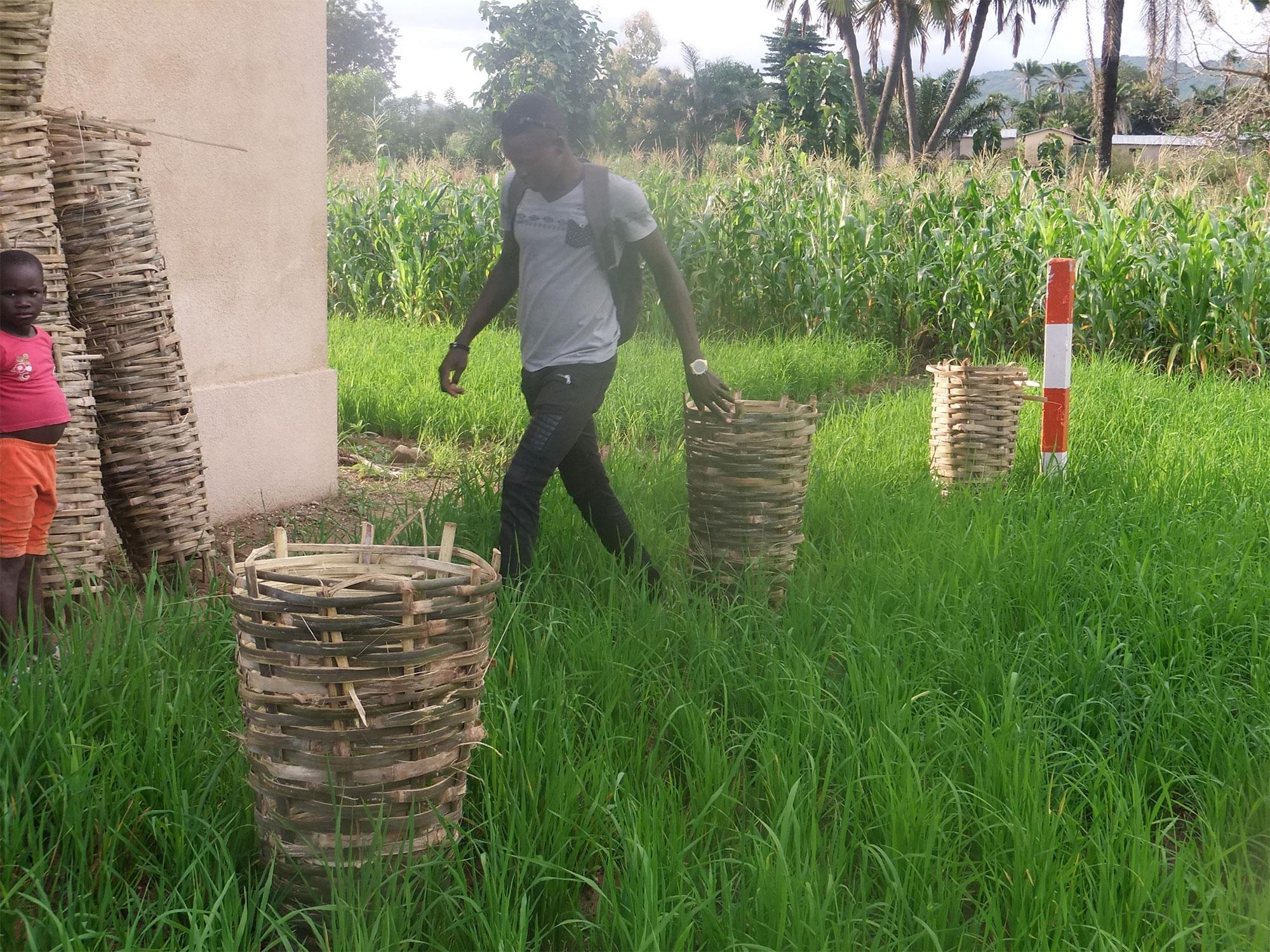 Premières plantations protégées dans des paniers pour délimiter le terrain